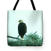 Eagle On A Frozen Pine Tote Bag by Jeff Swan