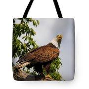 Eagle Portrait IIi Tote Bag