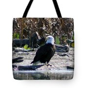 Eagle Posing By Water Tote Bag