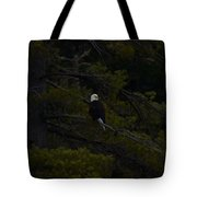 Eagle Splendor Tote Bag