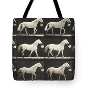 Eagle Walking With A Bucket In Mouth Tote Bag