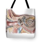 Ear Anatomy Tote Bag