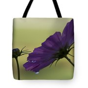 Early Dawns Light On Fall Flowers 01 Tote Bag