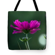 Early Dawns Light On Fall Flowers 03 Tote Bag