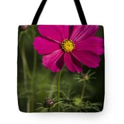 Early Dawns Light On Fall Flowers V 03 Tote Bag