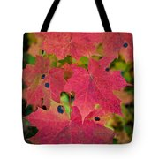 Early Fall Of Norway Maple Tote Bag