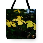 Early Fall Of Wych Elm Tote Bag