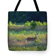 Early Morning Doe Tote Bag