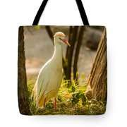 Early Morning Light On The Bird Tote Bag