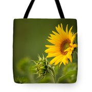 Early Morning Sunflowers Tote Bag