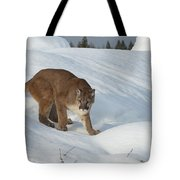 Early Morning Survey Tote Bag