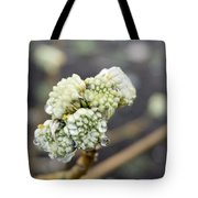 Early Spring 2 Tote Bag