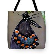 Eastern Black Swallowtail Tote Bag