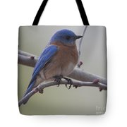 Eastern Blue Bird Tote Bag