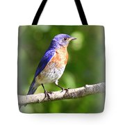 Eastern Bluebird - After His Bath Tote Bag