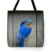 Eastern Bluebird At Nest Tote Bag
