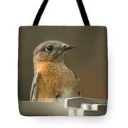 Eastern Bluebird Eye To Eye Tote Bag