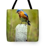 Eastern Bluebird Pose Tote Bag