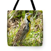 Eastern Meadowlark Tote Bag