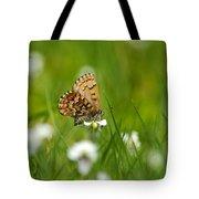 Eastern Pine Elfin Butterfly Tote Bag