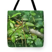 Eastern Pondhawk Female Dragonfly - Erythemis Simplicicollis - On Pine Needles Tote Bag