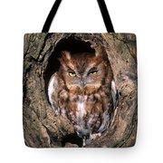 Eastern Screech Owl - Fs000810 Tote Bag