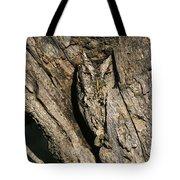 Eastern Screech-owl Otis Asio Wild Texas Tote Bag