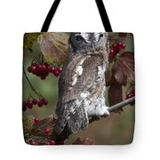 Eastern Screech Owl Red And Gray Phases Tote Bag