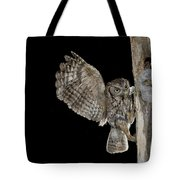 Eastern Screech Owls At Nest Tote Bag