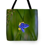 Eastern Tail Blue Butterfly Tote Bag