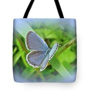 Eastern-tailed Blue Butterfly - Cupido Comyntas Tote Bag