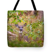 Eastern Whitetail Deer Tote Bag
