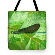 Ebony Jewelwing Damselfly - Calopteryx Maculata Tote Bag