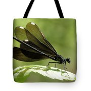 Ebony Jewelwing Fluttering For Male Tote Bag