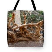 Eccentric Tree Root Growing In Ein Gedi Tote Bag