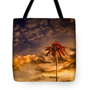 Echinacea Sunset Tote Bag by Bob Orsillo