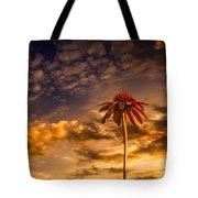 Echinacea Sunset Tote Bag