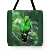 Eclectus Parrot-1 Tote Bag