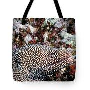 Eels 1 Tote Bag