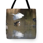 Egret And Geese At Gilbert  Riparian Preserve Tote Bag