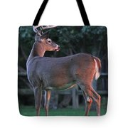 Eight Point Tote Bag