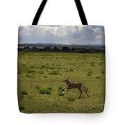 Eland Calf   #7195 Tote Bag