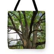Elder Oak Tote Bag
