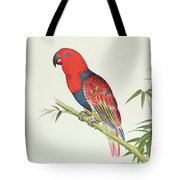Electus Parrot On A Bamboo Shoot Tote Bag