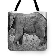 Elephant Bull In Black And White Tote Bag
