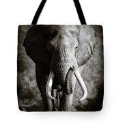 Elephant Bull Tote Bag