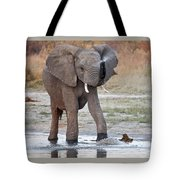 Elephant Calf Spraying Water Tote Bag