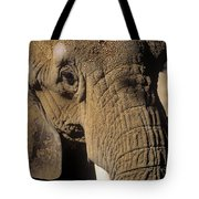 Elephant Portraint Tote Bag