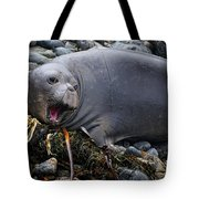 Elephant Seal Of Ano Nuevo State Reserve Tote Bag
