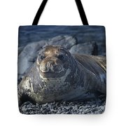 Elephant Seal Pup... Tote Bag